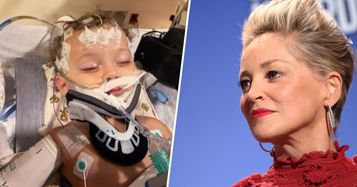 Sharon Stone requests petitions for nephew in 'all out organ disappointment'